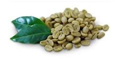 yeşil kahve ve zayıflama