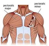 göğüs kasları egzersizi