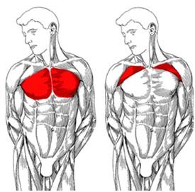 göğüs kası geliştirme